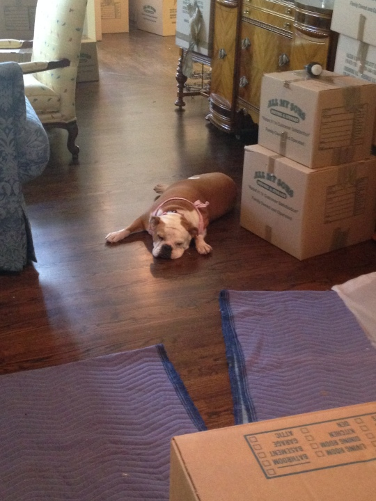 Moving is such hard work